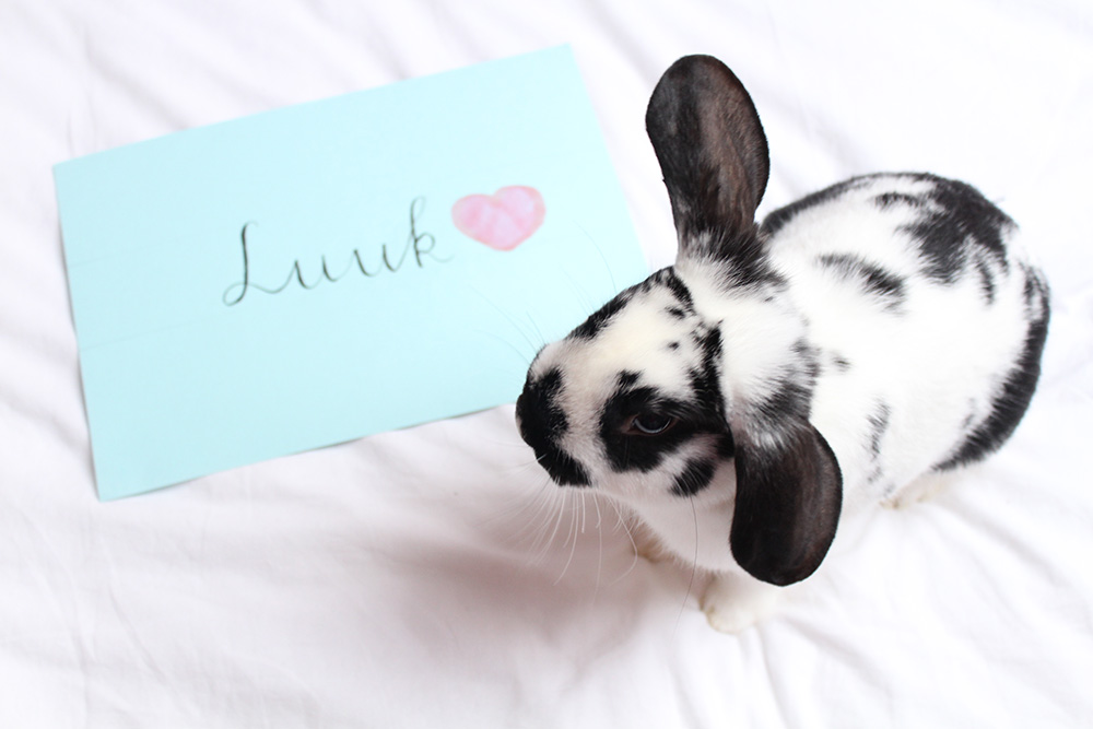 Luuk the Rabbit